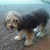 Adopt A Pet :: Pickles - Oakley, CA