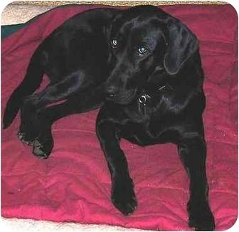 Labradoodle Dog for adoption in Cumming, Georgia - Emily