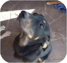 Shepherd (Unknown Type)/Hound (Unknown Type) Mix Dog for adoption in Santa Fe, New Mexico - Geno