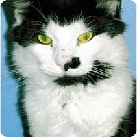 Adopt A Pet :: Zeke - Medway, MA