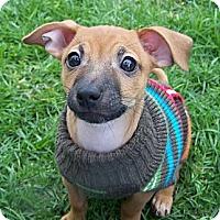 Adopt A Pet :: Grover - La Habra Heights, CA