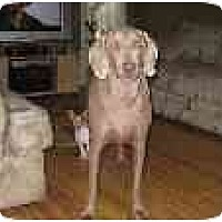 Adopt A Pet :: Ty  **ADOPTED** - Eustis, FL
