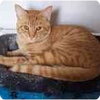 Adopt A Pet :: Gorgeous George - Arlington, VA