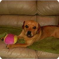 Adopt A Pet :: Jose - Glastonbury, CT