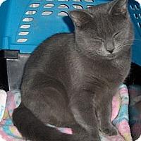 Adopt A Pet :: Lillie - Richmond, VA