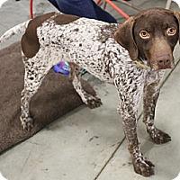Adopt A Pet :: Jack - Streetsboro, OH