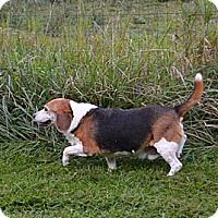 Adopt A Pet :: Odie - Bakersville, NC