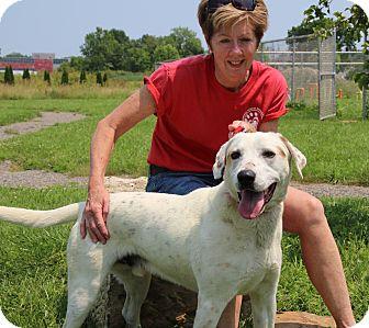 Hound (Unknown Type) Mix Dog for adoption in Elyria, Ohio - Bailey