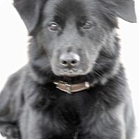 Adopt A Pet :: Duke - Norwalk, CT
