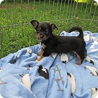 Adopt A Pet :: Mister Man - West Warwick, RI