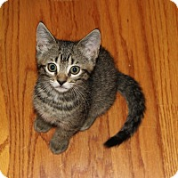Adopt A Pet :: Dera - Apex, NC