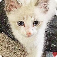 Adopt A Pet :: Duke - Mission Viejo, CA