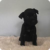 Adopt A Pet :: Lucey - GREENLAWN, NY