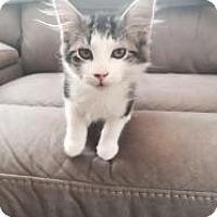 Adopt A Pet :: Buster - Jackson, NJ