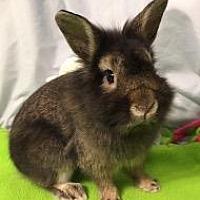 Adopt A Pet :: Roscoe - Woburn, MA