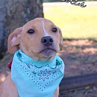 Adopt A Pet :: Bubbles - Batesville, AR