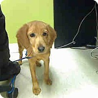 Adopt A Pet :: Charlotte  ADOPTED!! - Antioch, IL