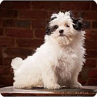 Adopt A Pet :: Patch - Owensboro, KY