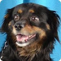 Adopt A Pet :: Waverly - Minneapolis, MN