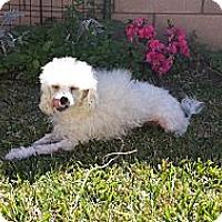 Adopt A Pet :: Sadie - San Dimas, CA