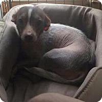 Adopt A Pet :: Summer - Santa Rosa, CA