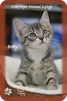 Domestic Shorthair Kitten for adoption in Waterbury, Connecticut - Betty