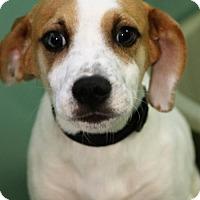 Adopt A Pet :: Razzle - Winchester, TN