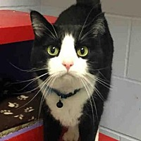 Adopt A Pet :: MICKEY - Ames, IA