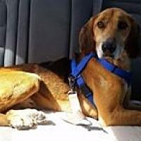 Adopt A Pet :: Dale - Staunton, VA