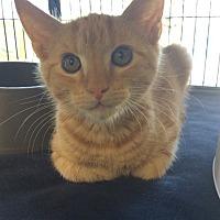 Adopt A Pet :: Otto - Moody, AL