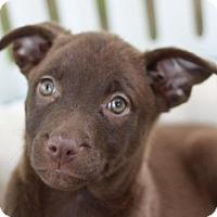 Adopt A Pet :: Petunia - MEET ME @ PETCO 8-19! - Danbury, CT