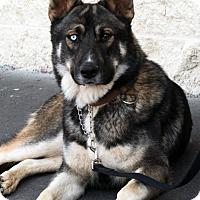 Adopt A Pet :: Jagger - Palmdale, CA