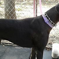 Adopt A Pet :: Athena - Ardmore, OK