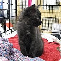 Adopt A Pet :: Purry Ellis - Vero Beach, FL