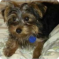 Adopt A Pet :: Derby - West Palm Beach, FL