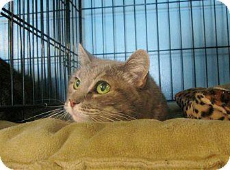 Domestic Shorthair Cat for adoption in Brooklyn, New York - Matilda