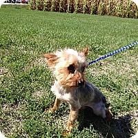 Adopt A Pet :: Gizmo - Skokie, IL