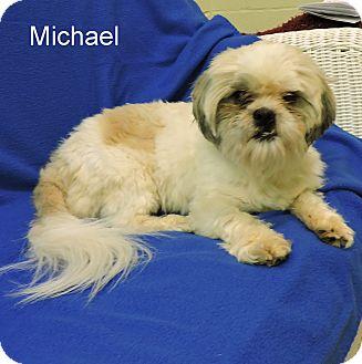 Shih Tzu Mix Dog for adoption in Slidell, Louisiana - Michael