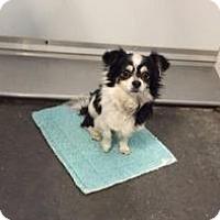 Adopt A Pet :: Nelson - Shawnee Mission, KS