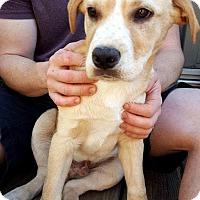 Adopt A Pet :: Riley - Manhasset, NY