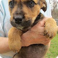 Adopt A Pet :: ZARA - Lincolndale, NY