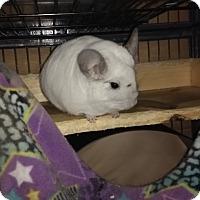 Adopt A Pet :: Day & Night - Avondale, LA