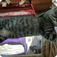 Adopt A Pet :: Chief - McHenry, IL
