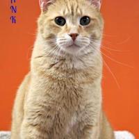 Adopt A Pet :: Frank - Vinton, IA