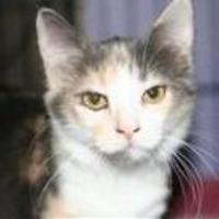 Adopt A Pet :: Matilda - Garland, TX