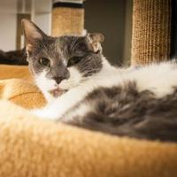Adopt A Pet :: Andee - Chicago, IL