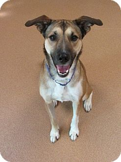 German Shepherd Dog Mix Dog for adoption in Norwalk, Connecticut - Stella