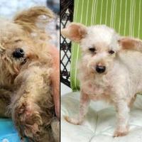 Adopt A Pet :: Mariah - Dalton, GA
