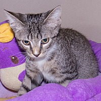 Adopt A Pet :: Milana - Elmwood Park, NJ