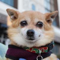 Adopt A Pet :: Potata - San Francisco, CA